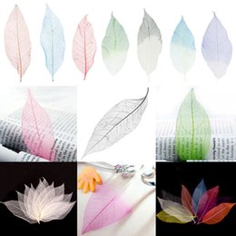 Wholesale Red Magnolia - Phenovo 50Pcs Lot Natural Magnolia Skeleton Leaf Leaves Card Scrapbook Wedding Party Decor