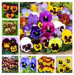 Pansies semi online-Limite di tempo !! 100 Pz Beautiful Pansy Seeds Mix Colore Ondulato Viola Tricolore Fiore Bonsai In Vaso Fai Da Te Giardino di Casa Spedizione Gratuita