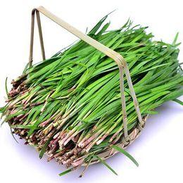 plantar semillas de peonía Rebajas Semillas de puerro Crecimiento perenne Raíz rápida Cebolleta Balcón Hortalizas 200 partículas / bolsa