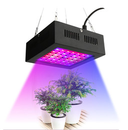 80W Mini LED coltiva la luce Full Spectrum Indoor Greenhouse cresce la crescita delle piante tenda Rosso blu UE AU US Regno Unito Plug Panel Light GR-007 da