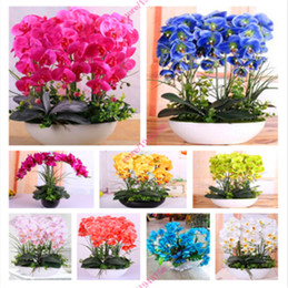 Orquídeas, flor, pote on-line-100 Pcs Misturado Chinês Cymbidium Orquídea Sementes de Flores Em Vasos de Flores Vivas Sementes de Orquídea Sementes de Hortaliças Orquídeas Planta Mudas