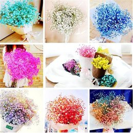 Wholesale Gypsophila Plant - Gypsophila paniculata seeds,perennial garden flower seeds,bonsai plant for outdoor,small,medium and large,100 pcs bag for sale