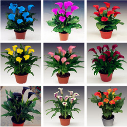 Wholesale wholesale lily flowers bags - Free Shipping 100 Pcs bag Calla Seeds,Calla Lily Seed,Rare Bonsai Flower Seeds (Not Calla Bulbs),Natural Growth for Home Garden