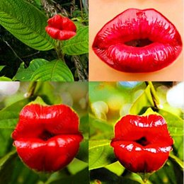 Wholesale Pots For Flowers - Red Lips Flower Seeds Rare Flower Pots Psychotria Elata Flower Seeds 100 pcs   bag bonsai pot plant for home garden