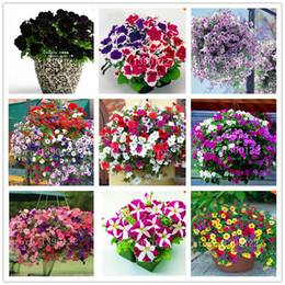 Wholesale Petunia Seeds - 100 pcs Garden Petunia petals flower seeds for garden petunia semillas de petunias flower seeds rare for DIY home garden