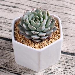 2018 pots de bonsaï en céramique gros mini fournisseurs de pots de fleurs en porcelaine blanche pour l'ensemencement de succulentes jardinières d'intérieur pépinière ? partir de fabricateur