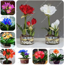 Wholesale Pots For Flowers - 100 Mixed Clivia Seeds, Free Shipping Cheap Clivia Seeds,Clivia Potted Seed, Bonsai Balcony Flower For Home Garden Best Gift For Kids