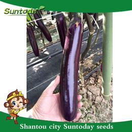 2019 flores impresionantes Suntoday Chinese LONG PURPLE EGGPLANT Solanum Melongena Semillas de hortalizas Asiático Planta de jardín Herencia No-GMO Híbrido Orgánico Semillas frescas