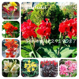 Wholesale Flower Germination - 20Pcs  bag Canna Seeds Mix Colors Diy Potted Plants Seeds Indoor Outdoor Pot Seed Germination Rate Of 95% Free Shipping