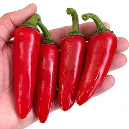Semi di pepe rosso online-Jalapeno Hot Chilli Pepper Seeds, 100 Seeds / Pack, Raro Heirloom High 'Vitamin C' Green Vegetable Red Hot Pepper