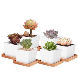 Wholesale flower desk - succulents pots with Bamboo Base Decorative Simple white flower pots planters plant potted on the desk home decoration GGA448
