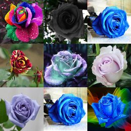 Wholesale Roses Gardens - New Colorful Rose Flower Seeds Cheap Free Fast Shipping 100Pieces Per Package Fast Shipping Home Garden Flower Decoration