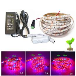 5 M 5050 LED Büyümek Işıkları DC 12 V su geçirmez Büyüyen LED Şerit Bitki Büyüme Işık Sera Tesisi için Adaptör ve Anahtarı ile Set nereden