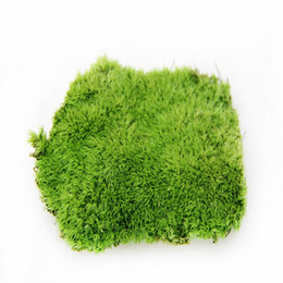 Wholesale nature flooring - artificial moss High-quality goods of moss Living moss artificial plant living plant real nature plant green grass