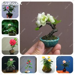 137 Bonsai Gifts Coupons & Deals