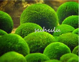 Wholesale Aquarium Wholesalers - New arrival ! 100 pcs bag aquarium Water Grass rare Green algae Aquatic Plant Seeds Indoor fish tank Beautifying Plant Seeds