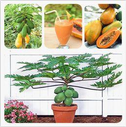 съедобные семена Скидка 100% настоящие семена папайи(Carica papaya). карлик органические сладкие семена папайи в бонсай, 20 шт. / пакет редкие семена фруктов съедобные Карика папайя