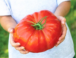 Wholesale Giant Fruit Seeds - 200 Pcs Fresh Heirloom Rare Giant Monster Tomato Seeds, Very Delicious Seeds Vegetables Healthy Food For Home Garden Plant Pot