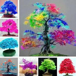 Bonsai blu online-Semi di albero Quattro stagioni foglia rossa semi di acero bonsai blu acero albero giapponese semi di acero Balcone piante per la casa Forniture da giardino I183