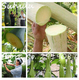 Wholesale Melons Seeds - Rare import of Ukraine seeds 10 pcs organic sweet delicious melon vegetables seeds good tasty a gift for kids garden plants