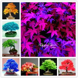 Fiori di albero di acero online-Time-Limited Promotion!!!30 Pcs Bag japanese maple tree seeds, 13 color mixed mini bonsai tree flower seeds +Christmas gift