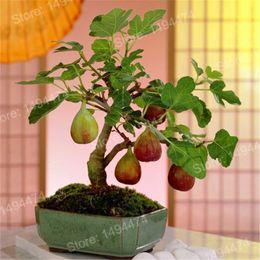 Piante di frutta online-100pcs semi di fichi tropicali rare mini fico semi di piante bonsai semi di frutta rari per la piantagione di casa germinazione