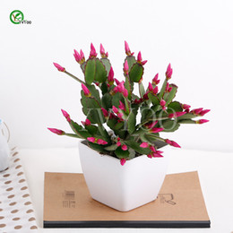 Wholesale China Plant Pots - Balcony potting seeds China Cactus Seeds Tree Potted Bonsai Courtyard Home Garden Bonsai Plant 30 pcs T035