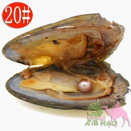 (Spedizione gratuita da dhl 2-5 giorni) all'ingrosso AAAA6-7mm sottovuoto perla d'acqua dolce ostrica, colore della perla è 20 # naturale viola da