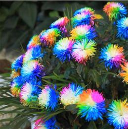 forniture bonsai Sconti 100 Pz / borsa Arcobaleno Crisantemo Semi di Fiori Ornamentali Bonsai, Colore Raro, Altri Semi di Crisantemo Giardino di Fiori Da Giardino Forniture I186