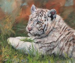 óleo de arte de tigre Desconto Arte finala --white-tiger-cub-01 Unframed a arte moderna da parede da lona para a decoração da casa e do escritório, pintura a óleo, painatings animais, quadro.