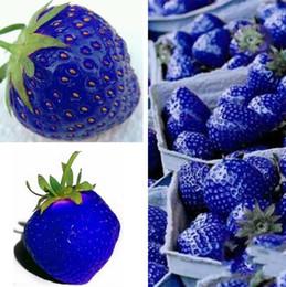 piante da giardino blu Sconti I più nuovi semi di frutta Blue Strawberry Seeds Giardino di DIY Semi di frutta Piante in vaso Forniture da giardino I181