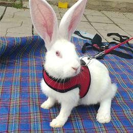 conigli animali Sconti Guinzaglio per animali con guinzaglio al guinzaglio, cuccioli Conigli Guinzaglio per guinzaglio Trazione Corda per animali piccoli con imbracatura regolabile e set di piombi