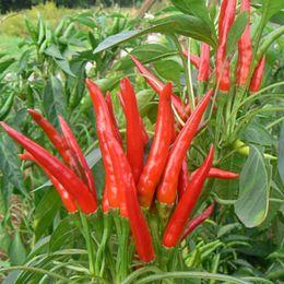 varietà di rosa rossa Sconti NO-GMO red hot chili peppers Semi, semi di frutta e verdura a casa 200 particelle / sacchetto