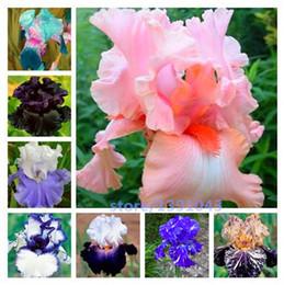 piante da giardino di erba Sconti Semi di Iris Colorati, Semi di Orchidea Iris, Rare Beautiful Heirloom Tectorum Semi di Fiori Perenni, 10 Colori Da Scegliere, Pianta Per Giardino 100 Pz