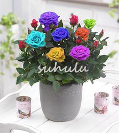 miniature bonsai garden diy Sconti 100 Pz / borsa Mini Arcobaleno Rosa Bonsai In Miniatura Rose Semi Giardino Domestico di DIY Luminoso E Bello In Vaso Rosa Semi Balcone Piante Da Giardino