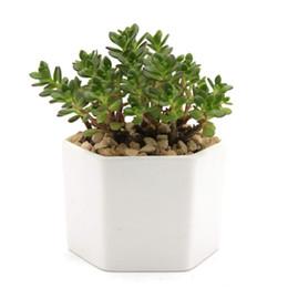Argentina Macetas de cerámica suculentas blancas modernas / mini contenedores de plantas de flores con platillos de bambú Suministro
