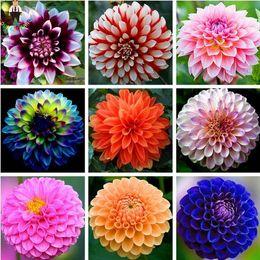 2019 sementes de flores bulbos 50 pçs / saco Dália Dahlia Flor Sementes, (Não Dahlia Lâmpadas) Bonsai Flor Sementes Lindo Flor Varanda Planta Em Vasos Para Casa Jardim sementes de flores bulbos barato