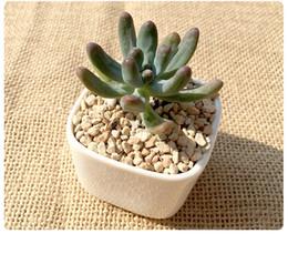Vasi di pianta in ceramica bianca online-Vasi Planty carnosi Vaso quadrato in ceramica Vasi in ceramica Vasi succulenti Micro Vasi paesaggistici Home Decor Vasi bianchi