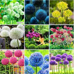 Wholesale organic flower gardening - 10 Colors 100 Pcs Mixed Giant Allium Giganteum Seeds Purple Allium Organic Gorgeous Flower For Home Garden Decoration Gift For Kid