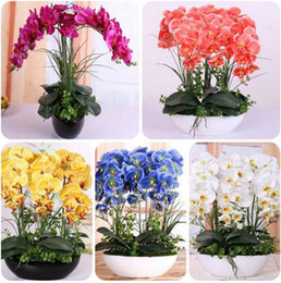 Wholesale Orchid Flower Plants - 100 PCS Phalaenopsis Orchid Seeds Rare Butterfly Orchid Potted Seeds Phalaenopsis Orchid Indoor Flowers Bonsai Potted Diy Home Garden Plant