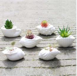 piantatori bianchi Sconti 6pcs / set Mini bianco piccolo vaso di fiori a forma di conchiglia ceramica succulente vaso di piante titolare Fairy Garden Cactus vaso di fiori Fioriera