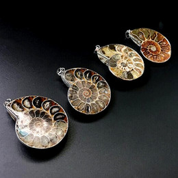 Wholesale Silver Ammonite - Wholesale Million Years Old Madagascar Ammonite Conch Sea Snail Whelk Fossil Opened Mixed Silver Plated  Natural conch Pendant pendant