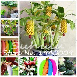 2019 grandi piante da giardino 200 Pz Banana Seeds Rare Big Hainan Rosa Banana Seeds Musa Velutina - Nano Pink Delicious Albero da Frutto Mini Bonsai Exotic Home Garden Piante grandi piante da giardino economici