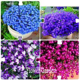 Wholesale Creeper Bags - Big Promotion! 100 Pcs Bag Lobelia seeds,bonsai flower seeds, Creeper, Ground Cover Chlorophytum garden landscaping