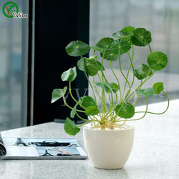 Wholesale Aquatic Seeds - Pilea Seeds 100Pcs bag Copper Grass Cold Water Indoor Putdoor Pot Seed Aquatic Plant Bonsai Annual Garden Ornaments T017