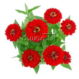 fiori zinnia Sconti Zinnia Dwarf Double Red Flower 100 Semi Zinnia elegans Giardino domestico fai da te Bonsai Paesaggio Contenitore fiore reciso Easy-growing