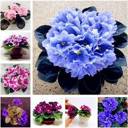 grandi semi di fiore Sconti Big Promotion! 100 Pcs African Violet Flower Seeds Rare Garden Bonsai Perennial Herb Flower Seed Variety Complete Mixed 24 Color