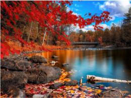2019 paesaggio di acero 5D Pittura Diamante DIY Maple Leaf Paesaggio Ricamo Full circolare Diamante Punto Croce Strass Mosaico Pittura Decor Regalo paesaggio di acero economici
