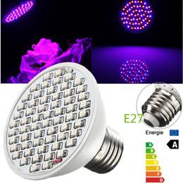 LED wachsen Licht 4W E27 ZW002 60 3528 SMD rot blau blühende Pflanzenlampe Garten Innenbeleuchtung 60Leds Birne AC85-265V von Fabrikanten