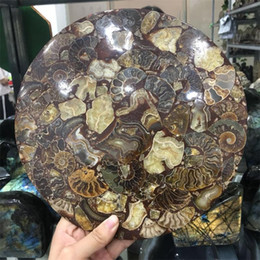 Concha de amonita online-25 cm Hermosa Fósil Ammonite Disco Madagascar al por mayor ammonite shell fósil espécimen Fengshui con soporte de metal